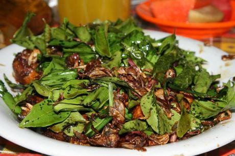 Ayam tangkap terkenal di Aceh pasca-tsunami, sehingga sempat juga disebut ayam tsunami